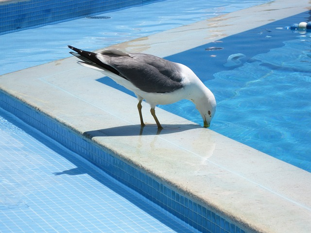 racek u bazénu